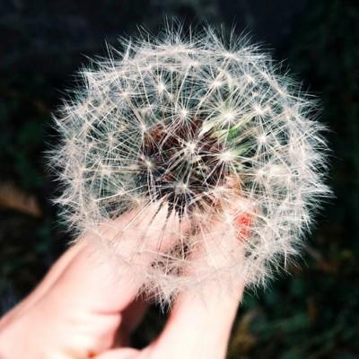Making Wishes vs Making Goals
